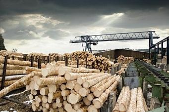 Norsk skog til Kina