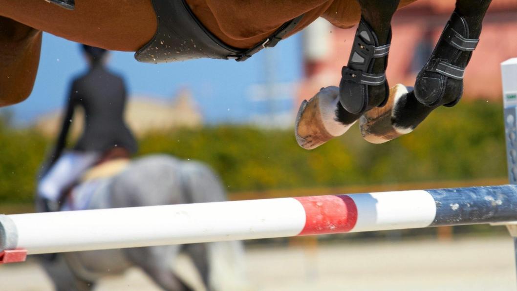 Irco Mena var en sprangridningshest og å lage avkom med den avdøde hestens sæd er svært ettertraktet.