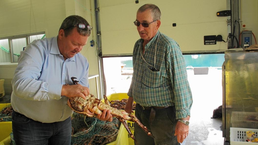 FISKEREN: Svein Ruud (t.v.) inspiserer en krabbe fra dagens fangst sammen med fiskeren Dagfinn Pettersen.Norway King CrabLeif Skjønhaug ASFoto: Halvdan Korsmo
