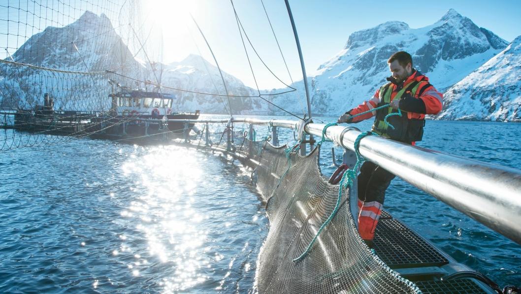 Oppdrettsnæringen står for mesteparten av verdiskapningen innen sjømat i Norge. 2016 ble et rekordår.