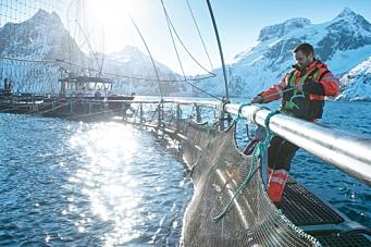 Sjømateksport for 91 milliarder