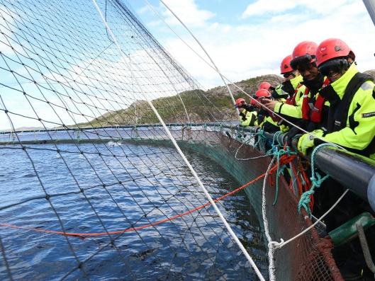 De 25 studentene på «The Seafood Industry Transportation Challenge» ble også kjent med produksjonen av laks, før de planla framtidens transport.
