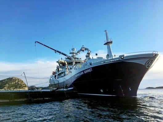 Norwegian Gannet er stat i drift, men kan bli stanset av det nye forslaget til formulering av Kvalietsforskriften. Her henter skipet opp laks fra en merd i Farsund.