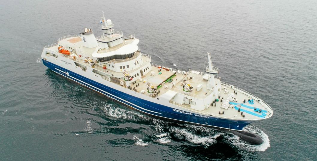 Norwegian Gannet, Hav Lines slakteskip, har introdusert en helt ny måte å slakte og frakte fisk på.