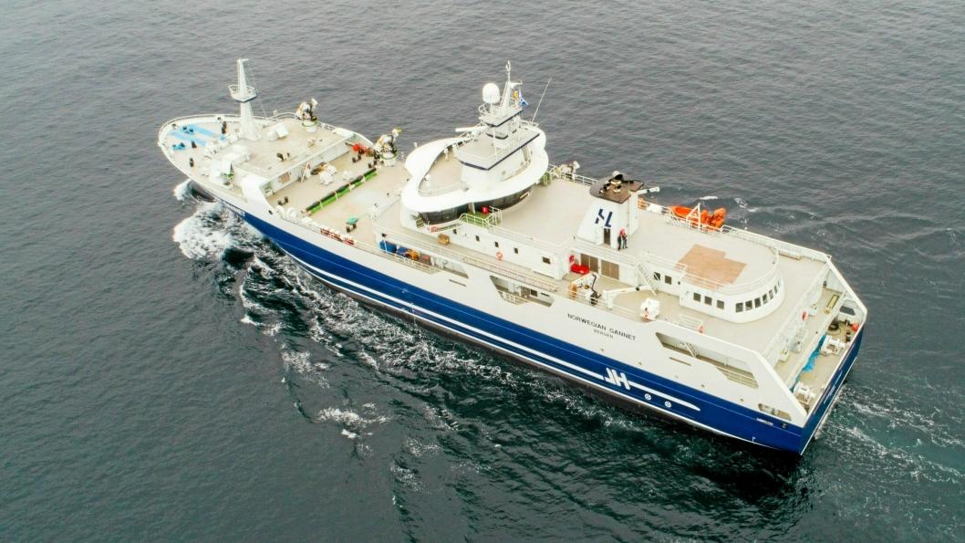 Hav Lines slakteskip Norwegian Gannet har siden januar 2019 skipet norsk laks  direkte til Hirtshals.
