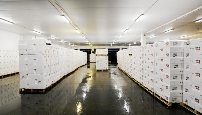 PÅ VEI TIL EUROPA: Lastebillass med laks står klare eksport inne på terminalen. Hver dag er i snitt rundt 30 lastebiler innom Terminal 1.