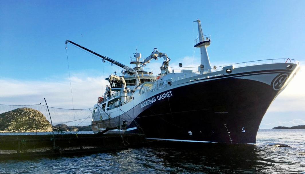 Norwegian Gannet er et banebrytende, men omstridt skip. Nå får rederiet Hav Line dispensasjon til å drive videre i ti år.