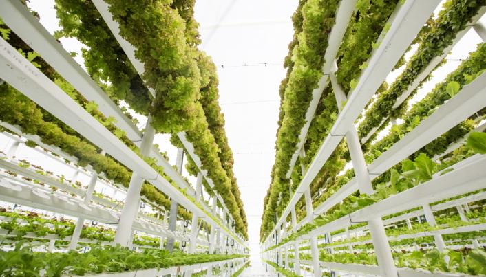 EFFEKTIVT: Store innendørs dyrkingshaller kan være fremtidens måte å dyrke mat på, både effektivt og bærekraftig.